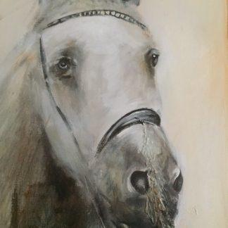 Theo Broeren: paard
